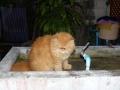 Garfield - Bangkok