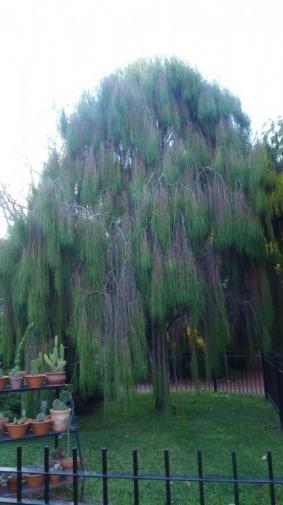 Jardin Botanique - Buenos Aires