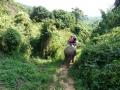 Ballade à dos d\'éléphant - Chiang Mai