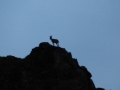Désert de Gobi - Yol Canyon