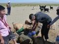 Désert de Gobi - on boit l\'eau des chèvres