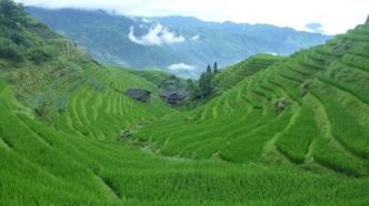 Dragon's Backbone Rice Terraces (Longsheng)
