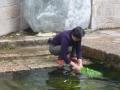 Lijiang - White Horse Dragon Pool