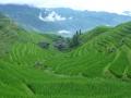 Terraces de Riz de Longsheng
