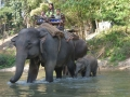 Traversée d\'éléphants - Chiang Mai