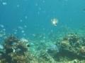 Snorkeling - El Nido