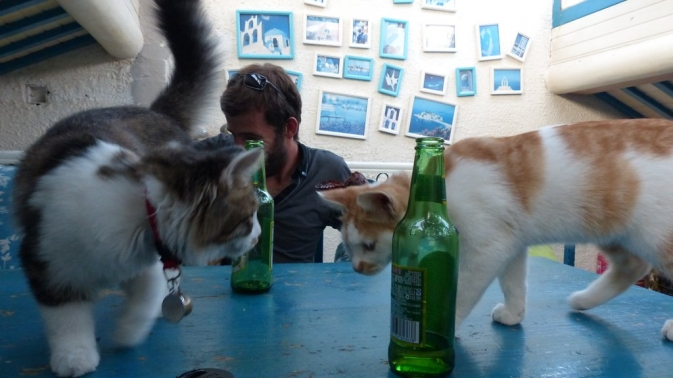 Pékin - Bar à chats