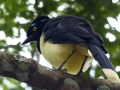 Chutes d\'Iguazú