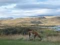 Torres del Paine - Jour 4 : Laguna Amarga