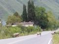 Entre Salta et Cachi