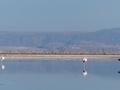 Lagune de Chaxa