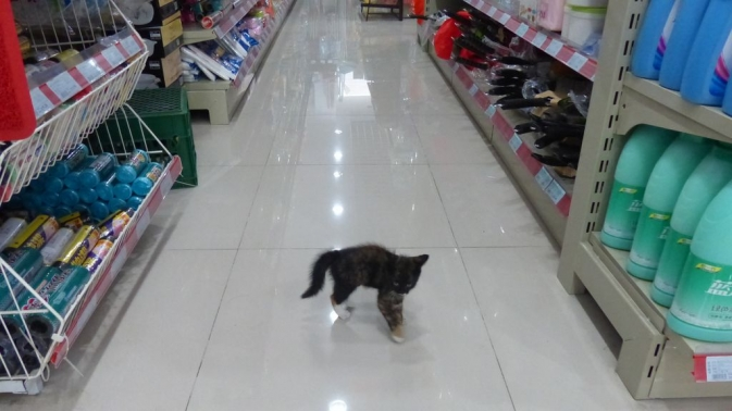 Chat dans un magasin