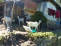 Jour 2 : de Ngadi Bazar à Jagat